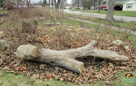 dead tree important to wildlife