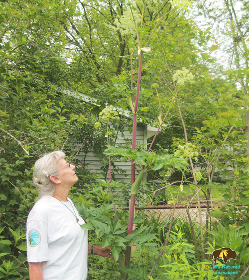 Something to Lean On (dealing with tall native perennials)