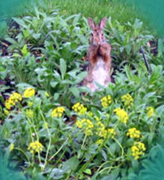 4 w 39 s of basic garden maintenance water weed watch and wait for Basic garden maintenance