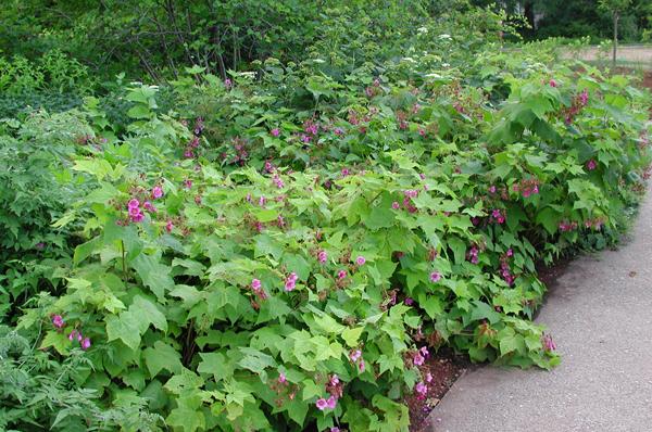 8 Fall-Blooming Flores amigable para las abejas, las aves y las mariposas - Modern Farmer