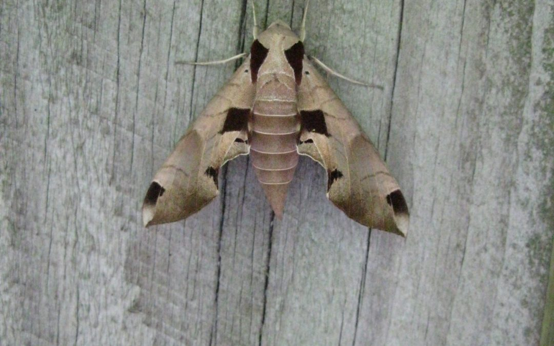 Butterflies are neat, but let's celebrate moths too!