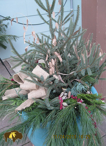 Native Northern Sea Oats, Coralberry, Eastern Red Cedar mixed with other evergreens and a burlap bow, make a very nice natural arrangement that will last many months outdoors.