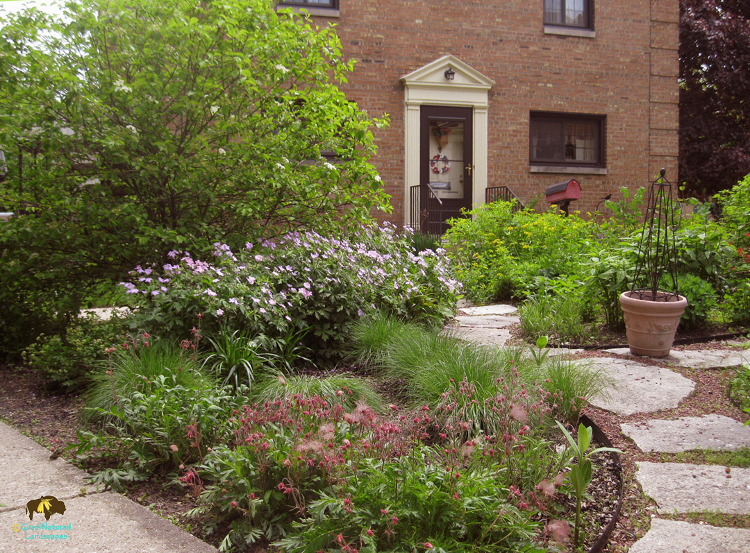 Elmhurst Project – Native plants, wildlife habitat, rain garden in townhome landscape