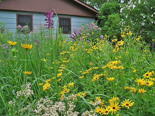 Prairie Garden wildlife habitat Naperville yard image