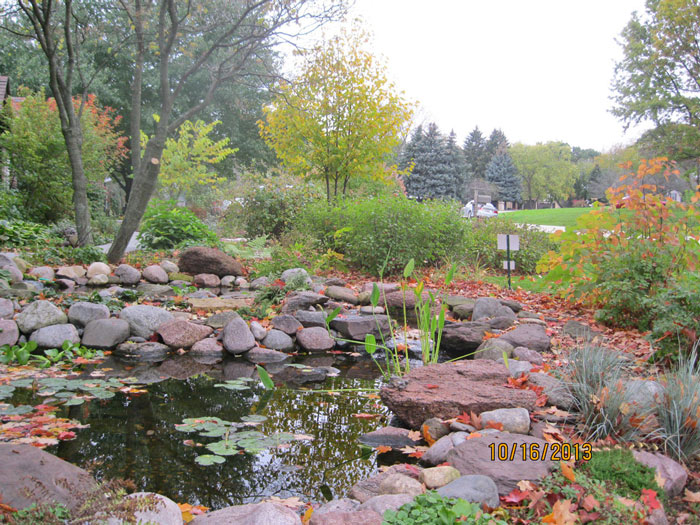 Pond and native plants for wildlife front yard photo