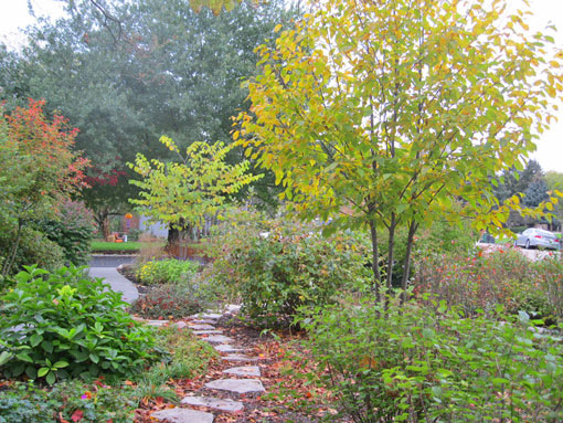 Native plants fall color season interest paths photo