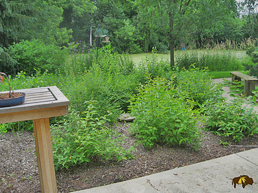 Rain garden with native plants image