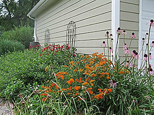 Native plants wildlife habitat erosion control side garage landscape photo
