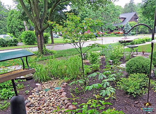 Rain garden with native plants image