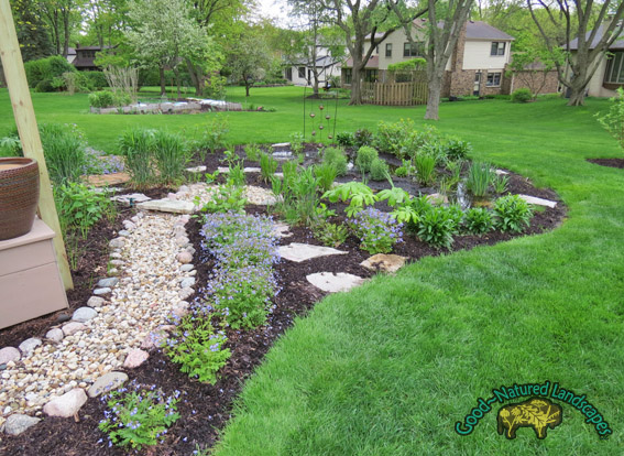 Naperville Rain Garden 1 year after installation
